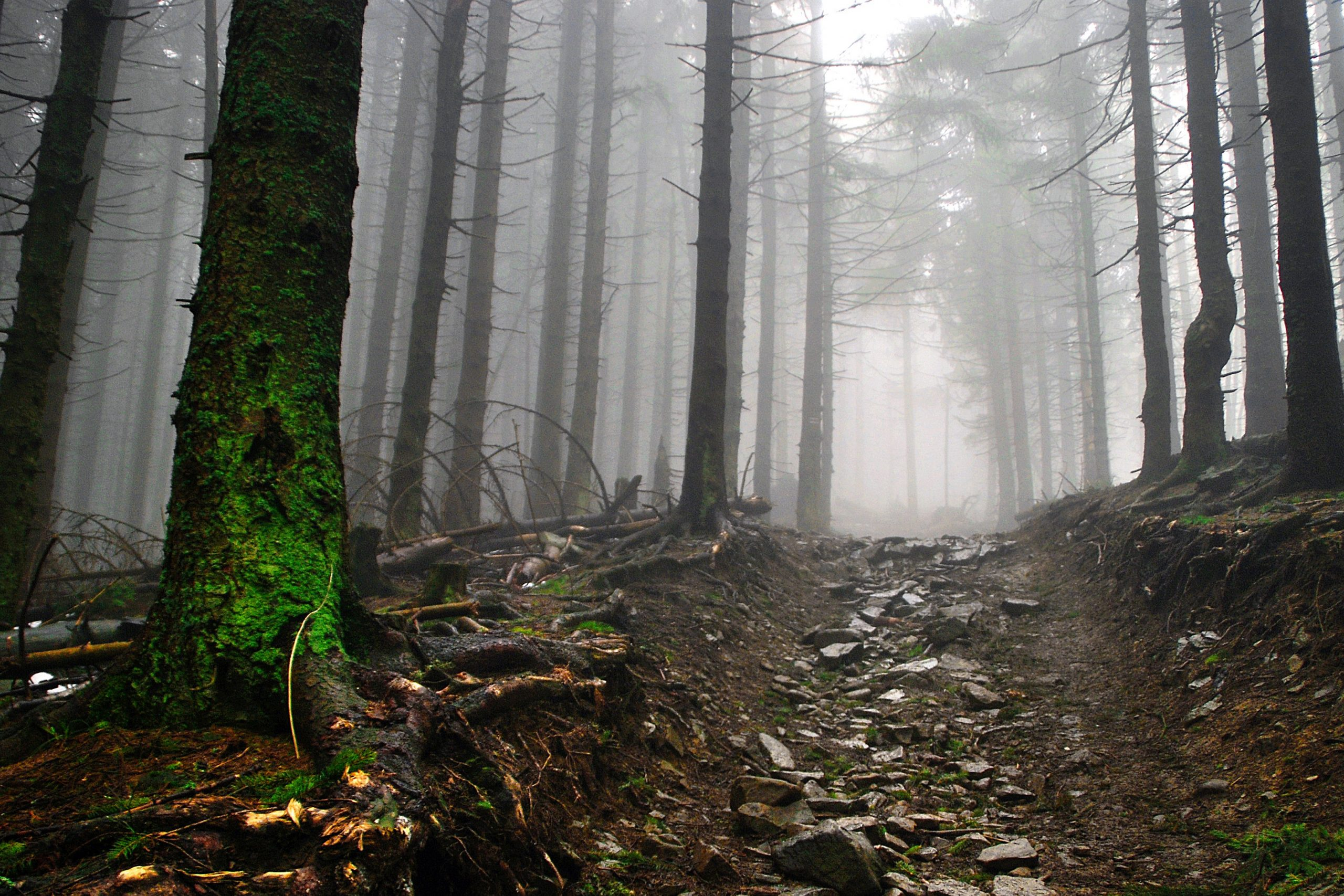 Rocky path in the woods